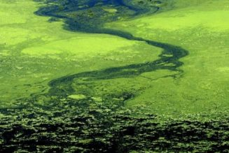 OriginOil Announces It Can Produce Algae Fuel In Existing Oil Refineries