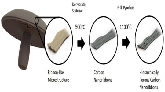 Anodes made from mushrooms may improve battery performance