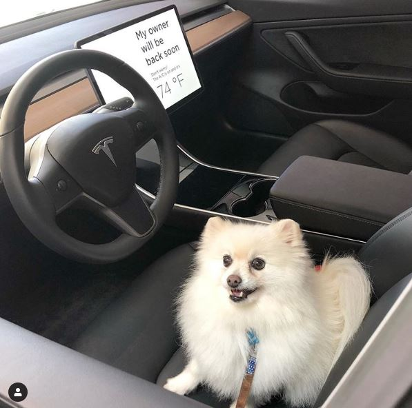 "Tesla's ""Dog  Mode"" Keeps it Cool"