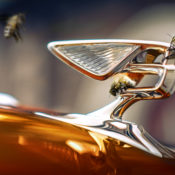 Bentley Honey, a New Play on the New Flying B